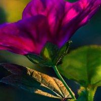 Закатный свет :: Владимир Шамота