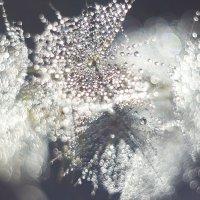 Солнечные брызги :: Седа Ковтун