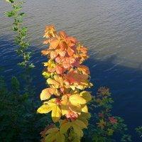 Встречая золотую осень :: Nina Yudicheva