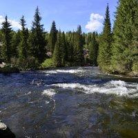 Малые реки Саян. Крол. :: Сергей Щербаков