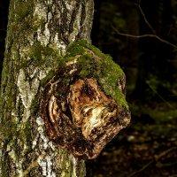 Смотрящий над лесом. :: Анатолий. Chesnavik.