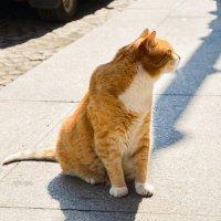 Питерский кот :: Олеся Семенова