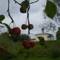 """""""Райские"""" яблочки :: BoxerMak Mak"""