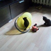 Котята милые ребята! :: Ольга Кривых