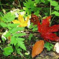 Осень в лесу :: татьяна