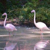 розовый фламинго :: Yelena LUCHitskaya