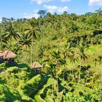 Рисовые поля на Бали :: Demian