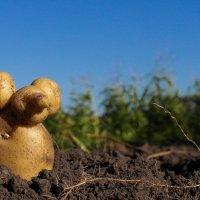 Картофельная мышь :: Денис Антонов