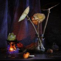 В логове у ведьмочки... :: Svetlana Sneg