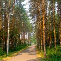 Трасса в лесу :: Вячеслав Баширов
