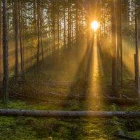 Шишкин лес :: Фёдор. Лашков