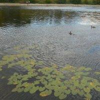 Осенний пруд :: Мила
