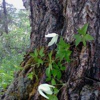 Моя неожиданная находка в лесу :: Ирина Останина