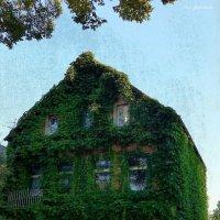 Весь покрытый зеленью, абсолютно весь :) :: Nina Yudicheva