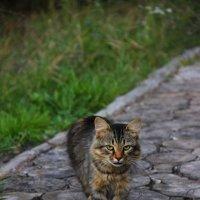кот который гуляет сам по себе :: Владимир