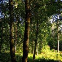 Сентябрь в лесу :: Андрей Лукьянов