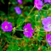 в цвете :: Ирина Ляйнвебер