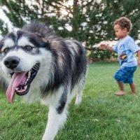 Рейдер и собака по прозвищу Волк :: MVMarina