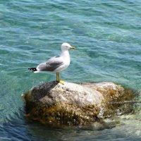 Подруга моря :: Ольга Иргит