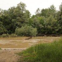 Река Фарс после дождей. :: Олег Афанасьевич Сергеев