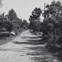 деревенские дорожки :: Света Кондрашова
