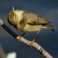 Почему-то вертишейкой зовут другую птицу :: Павел Руденко