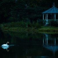 вот и первый лебедь на прудах :: Timofey Chichikov
