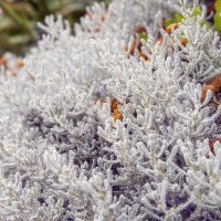 Зимний сад летом :: Constantine