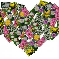 Люблю цветы :: Елена *