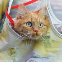 Кошка в сумке :: Ксения Лабуш