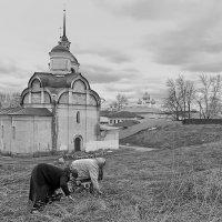 На подножном корме :: Николай Белавин