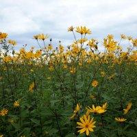 Цветы :: Глен Ленкин