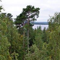 Остров Каменный :: Ольга