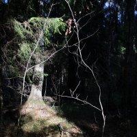добро пожаловать в лес :: sv.kaschuk