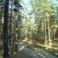 Дорога в лесу. Воронежская область :: татьяна