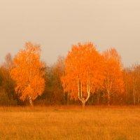 Золотая осень :: Ирина Останина