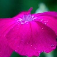 10 капель дождя ... :: Константин