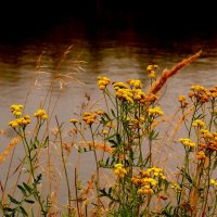 растительность у озера :: Александр Прокудин