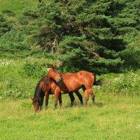 IMG_4521  кони :: Олег Петрушин