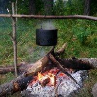 Таежный чай :: Елена Бушуева