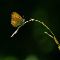 Бабочка :: Надежда