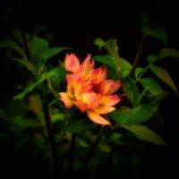 Огненный цветок :: Людмила Фил