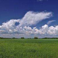 Хлебной поле :: Виктор Четошников