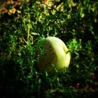яблочко в обьятиях травы :: Ольга Сафонова