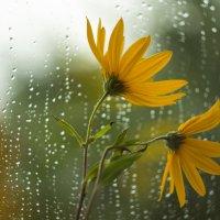 летний дождь... :: Саша Ш.