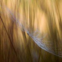 В травах бабьего лета... :: Андрей Ветров