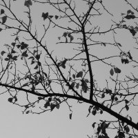 Япония зимой :: Виктория Нефедова