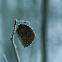 ледяной дождь :: Михаил Денисов