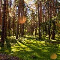 Просто лес :: Олег Дорошенко