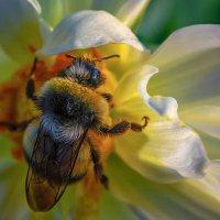 Цветок, насекомое. :: Виктор Иванович